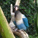 azul personata